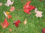 Fall foliage 012