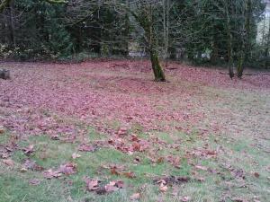 Lower pasture leaves