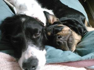 Pal and Daisy, sleepy snuggly