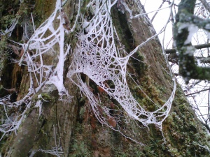 The frost covered spider webs look like tiny jeweled nets - like something the faeries would leave.