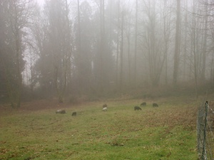 The scene later, after the fog rolled in (and the sheep were out).
