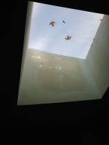 Skylight art.  This is not one of the ones that's leaking, thankfully because it's right over my bed!