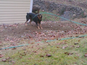 A more typical pastime - playing with the garden hose and having tons of fun!