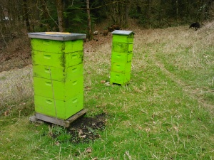 Both hives are sooty with mildew after a long, wet winter.