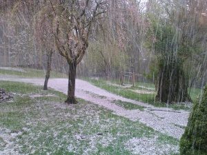 Miserable pounding hail storm last Saturday - I suppose I should be grateful that this weekend it was just rain.