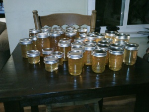 About 2/3 of the 50 pounds of honey I harvested (the rest has already been given away or sold).