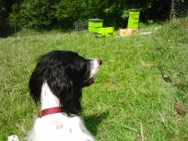 Sitting with Pal, watching the hive activity after the nuc installation.