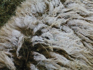 Frosty fleece