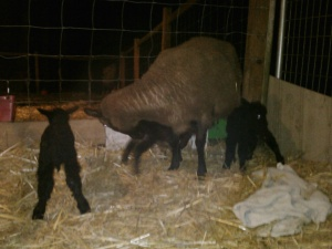Just an hour old and strong and healthy.