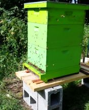 This hive, from the super healthy package installed in April, was so huge the dog crate was nearing collapse with the weight.