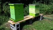 I finally got the beehives off of the dog crates. Both hives are healthy and growing.