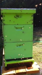 The big hive, the weekend of August 13.