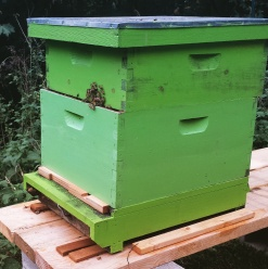 A quick inspection after work last week and there were almost no bees left, and honey stores nearly gone. It's too late in the season to restart.