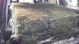 This week's hay load.