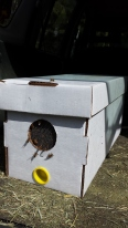 After a year-long absence, I have bees again.